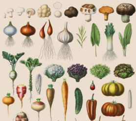 cropped-botanical-vegetables_beige.jpg